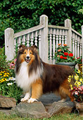 DOG 01 CE0220 01