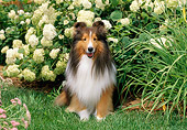 DOG 01 CE0222 01