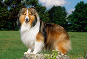 DOG 01 CE0223 01