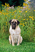 DOG 01 CE0225 01