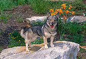 DOG 01 CE0228 01