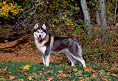 DOG 01 CE0231 01