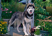 DOG 01 CE0232 01