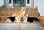 DOG 01 DC0016 02