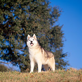 DOG 01 DC0092 01
