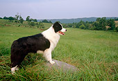 DOG 01 DC0155 01
