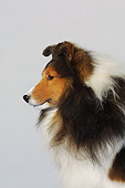 DOG 01 DC0189 01