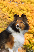 DOG 01 DC0191 01