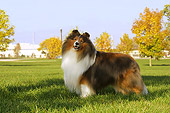 DOG 01 DC0192 01