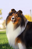 DOG 01 DC0193 01