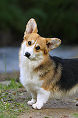 DOG 01 DC0198 01