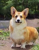 DOG 01 DC0199 01