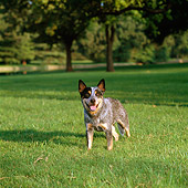 DOG 01 DC0226 01