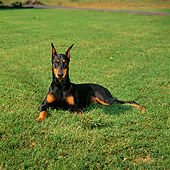 DOG 01 DC0240 01