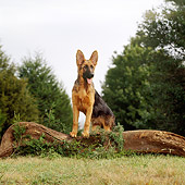 DOG 01 DC0246 01
