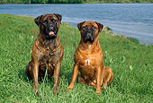 DOG 01 FA0002 01