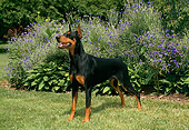 DOG 01 FA0010 01