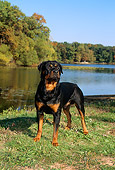 DOG 01 FA0013 01