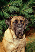 DOG 01 FA0018 01