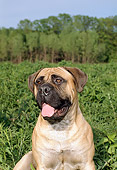DOG 01 FA0019 01