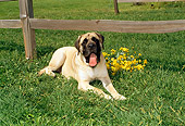 DOG 01 FA0020 01