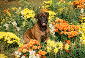 DOG 01 FA0022 01