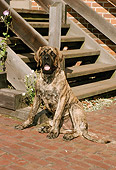 DOG 01 FA0023 01