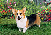 DOG 01 FA0024 01