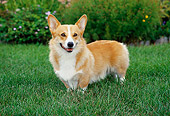 DOG 01 FA0025 01