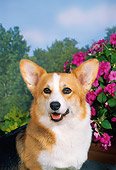 DOG 01 FA0027 01