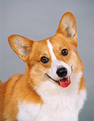 DOG 01 FA0028 01