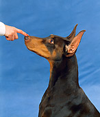 DOG 01 FA0030 01