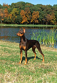 DOG 01 FA0034 01