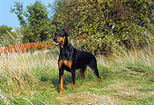DOG 01 FA0035 01