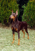 DOG 01 FA0037 01