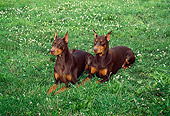 DOG 01 FA0039 01