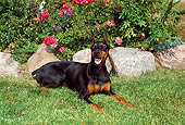 DOG 01 FA0040 01