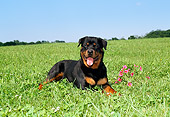 DOG 01 FA0042 01