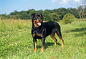 DOG 01 FA0043 01
