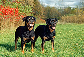 DOG 01 FA0044 01
