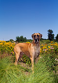 DOG 01 FA0049 01