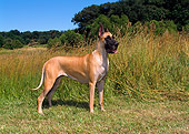 DOG 01 FA0051 01