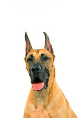 DOG 01 FA0055 01