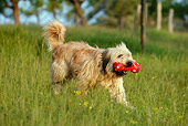 DOG 01 KH0004 01