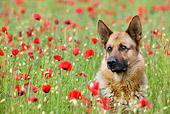 DOG 01 KH0006 01