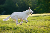 DOG 01 KH0008 01