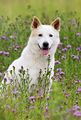 DOG 01 KH0010 01