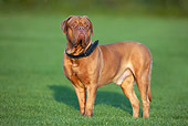 DOG 01 KH0014 01