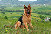 DOG 01 KH0015 01