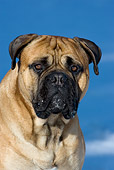 DOG 01 KH0020 01